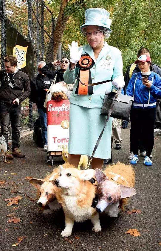 美国人爱狗,从那些狗节就能看出