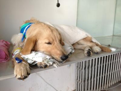 宠物医疗规范发展,还需迈过几道坎?