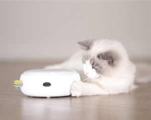 霍曼智能宠物玩具 甜