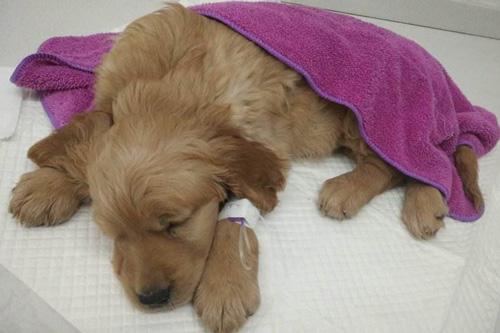 狗狗得了肠炎怎么办?狗狗肠炎的症状及治疗方