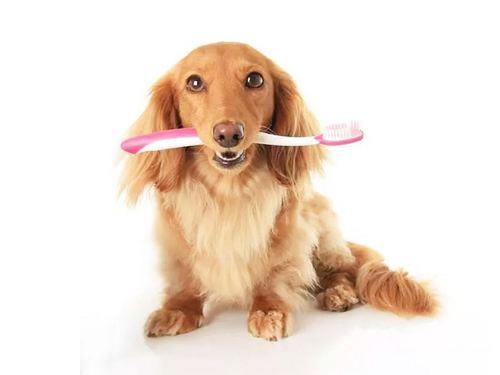引起狗狗口臭的原因