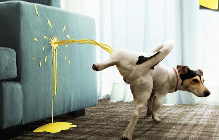 引起狗狗排尿异常的原因