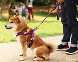 多尼斯狗狗单双头牵引绳 胸背带脖圈