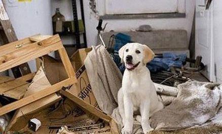 狗狗独自在家喜欢搞破坏应该怎么办