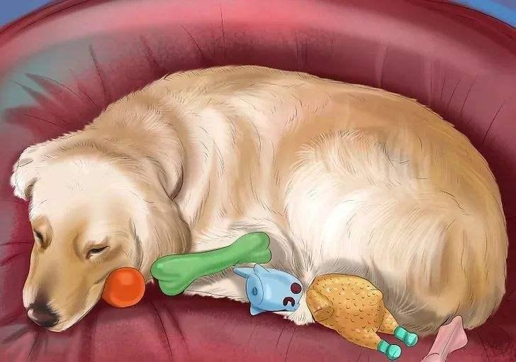 判断狗狗是否怀孕的几种方法