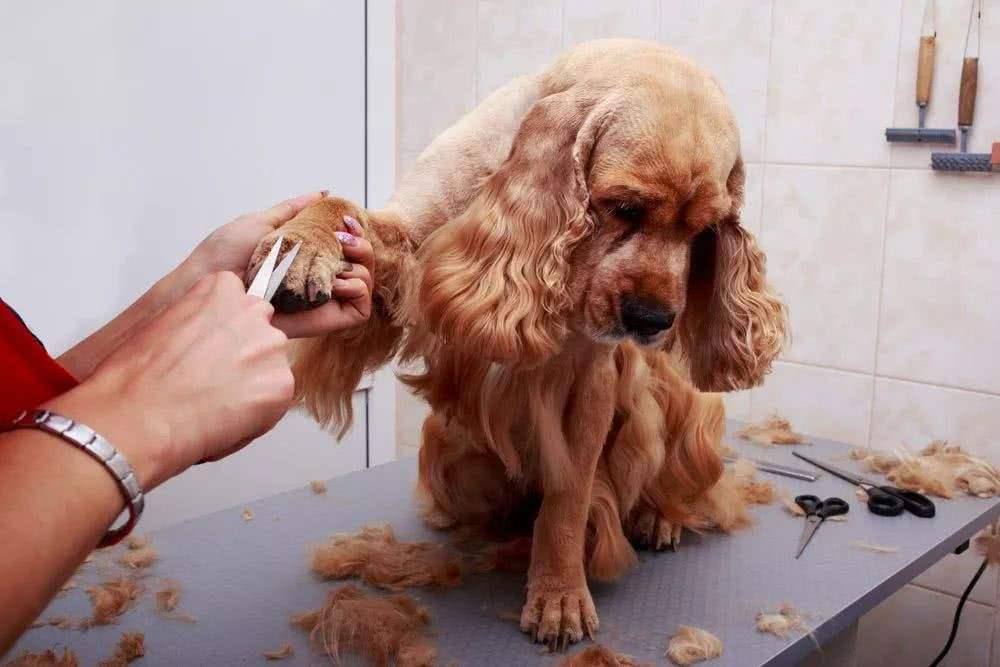 宠物美容师想拿高薪,须做到这4点!
