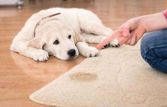 這樣訓練狗狗定點大小便,讓它不再亂拉亂尿