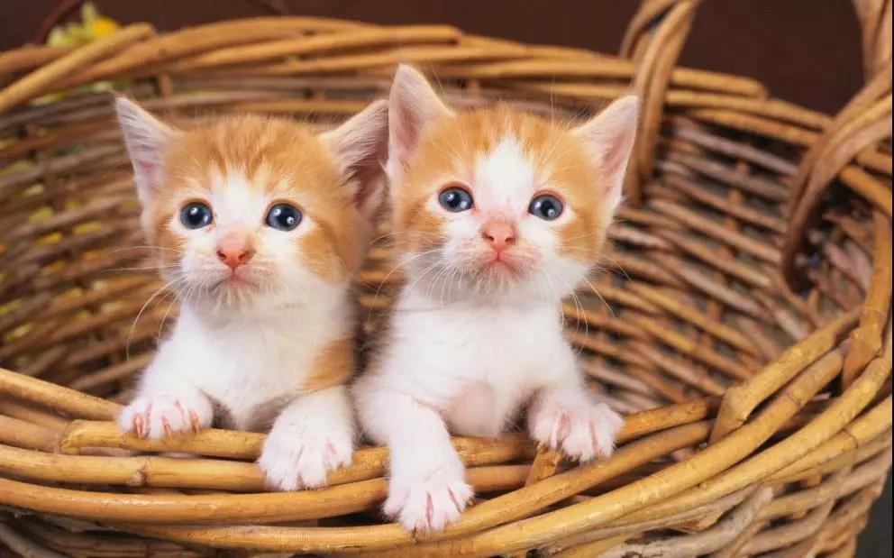 猫咪有哪些常见的皮肤病,应该怎么预防和治疗