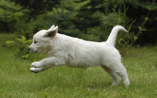 狗狗出门乱跑怎么办
