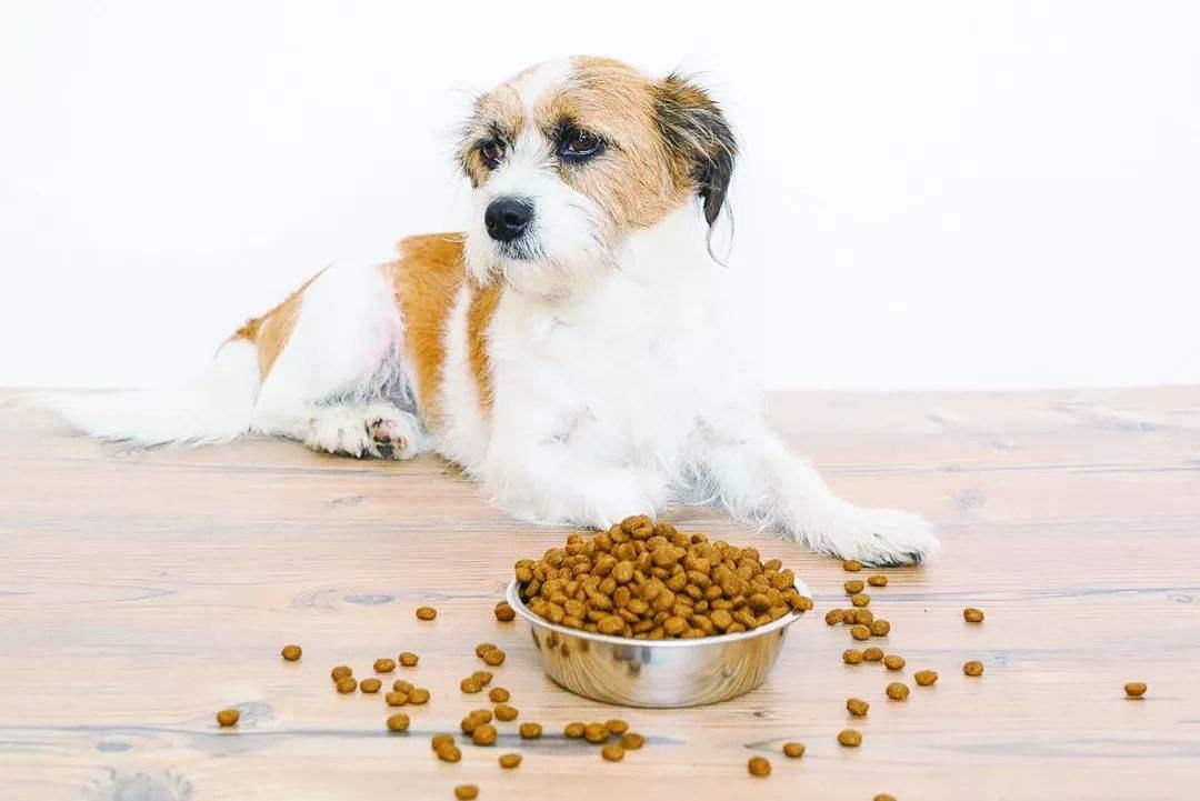 狗狗挑食是什么原因引起的,应该如何改善狗狗