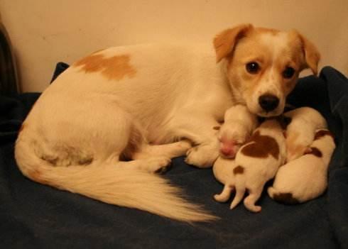 母狗难产是什么原因,应该怎么办?