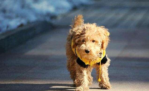 狗狗体外驱虫喷剂的使用方法及注意事项