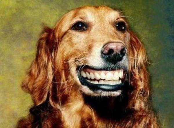 狗狗常患的口腔疾病