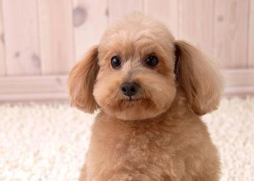 狗狗常見的生殖系統疾病
