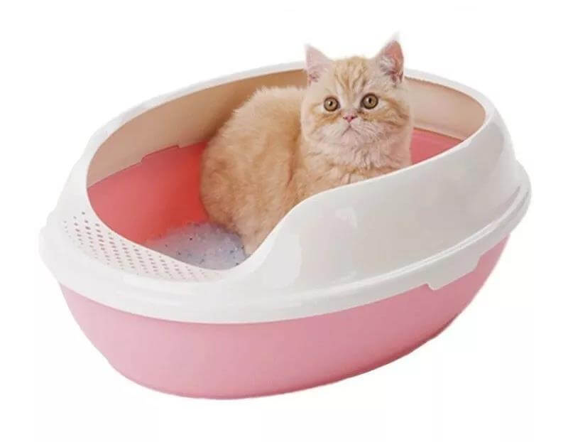 猫砂盆很臭,如何解决猫砂盆异味的问题?