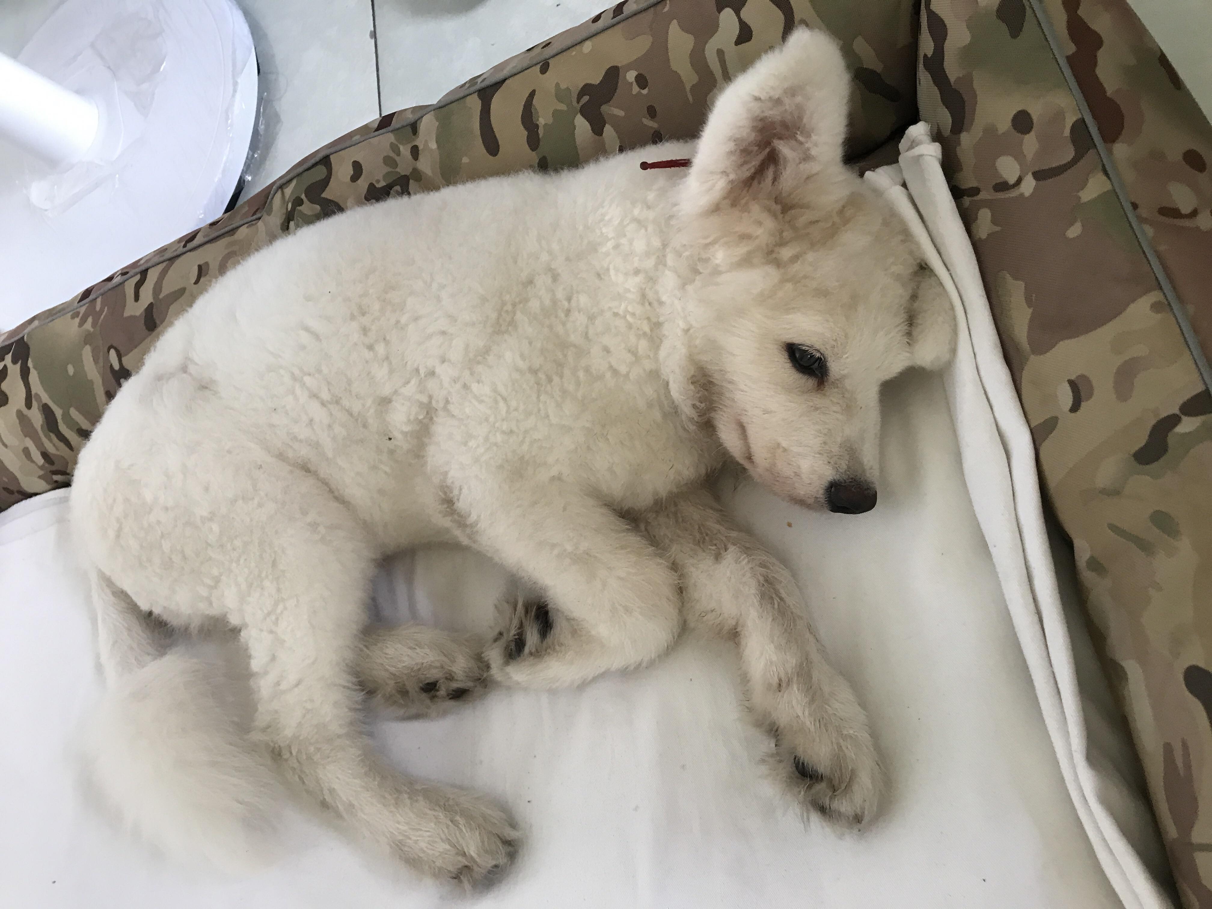 狗狗为什么会感冒,狗狗感冒了应该怎治疗