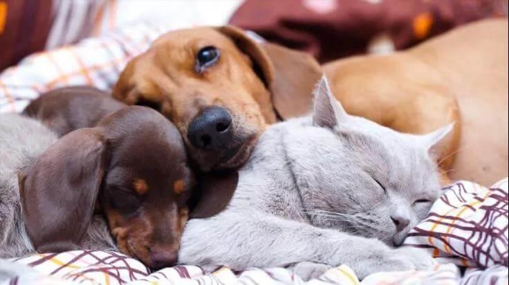 宠物常见的五大健康问题