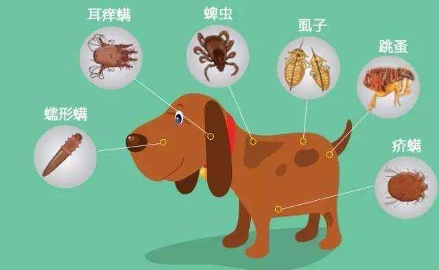 宠物应该怎么驱虫,宠物多久驱虫一次?