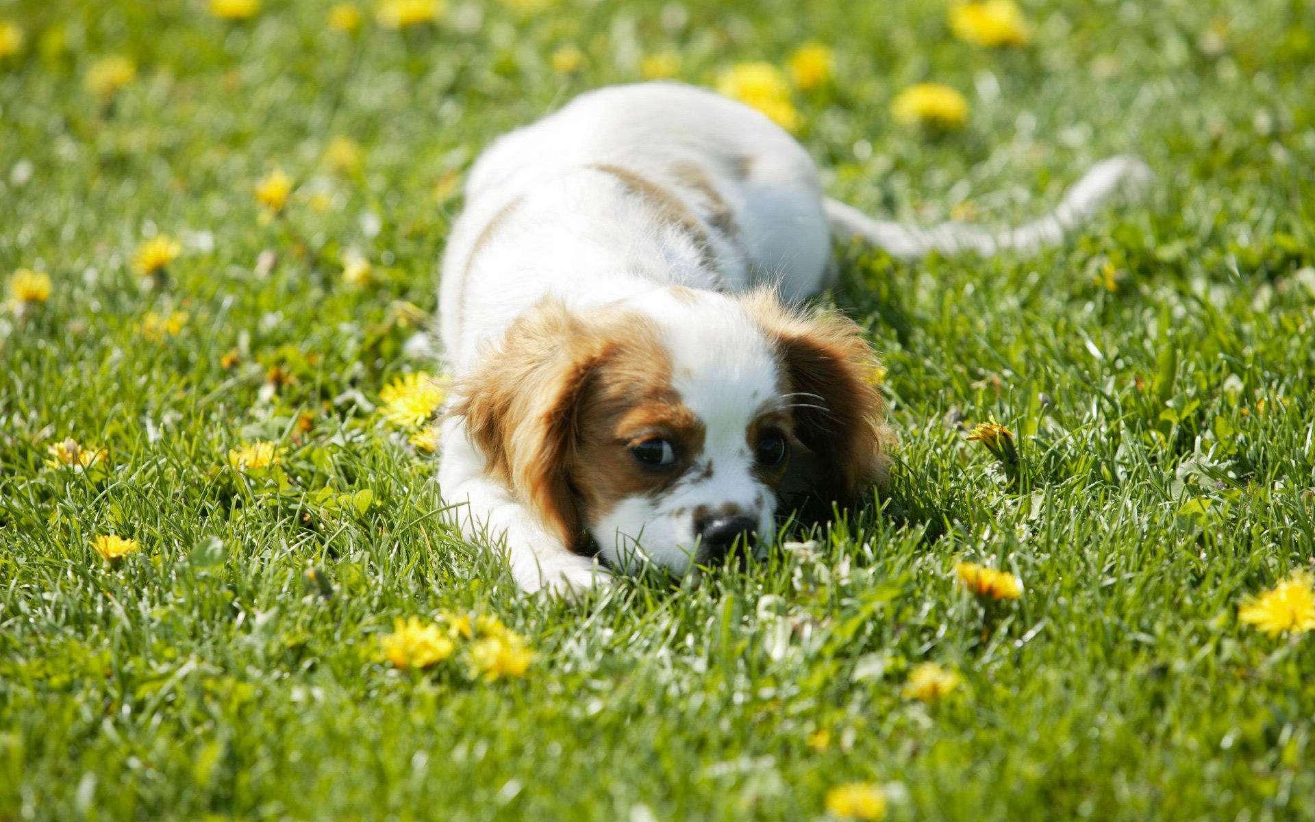 在春季需要注意预防狗狗这些常见病