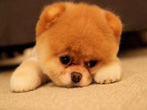 狗狗为什么会咳嗽,狗狗咳嗽的5种原因!