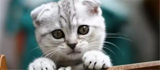 什么猫咪最受欢迎,来看看十大最受欢迎的宠物