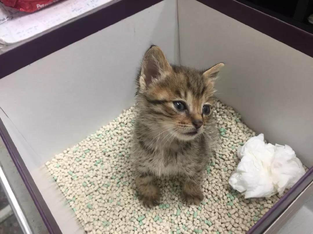 如何训练宠物猫在厕所大小便