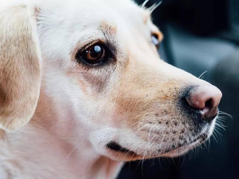 狗狗眼睛有红血丝是什么原因,应该怎么做?