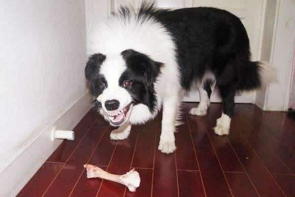 狗狗护食应该怎么改善,狗狗护食训练方法!