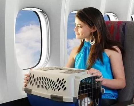 海南航空西安首例客舱宠物运输