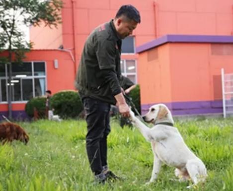 怎样为自家狗狗选择合适的训犬培训学校