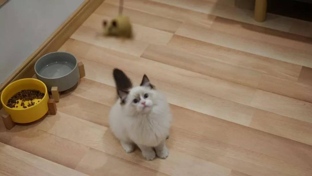 夏季炎热,猫咪厌食不吃东西怎么办