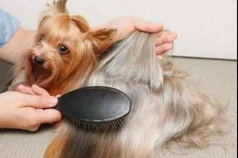 盘点常给狗狗梳毛的几大好处