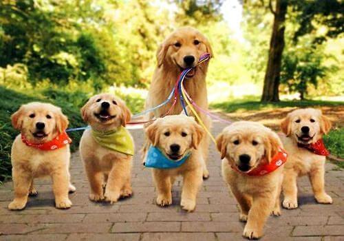养狗之前先了解一下 如何挑选一只适合自己养的
