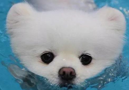 给狗狗洗澡的注意事项,了解这些正确给狗狗洗