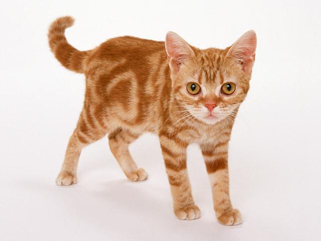 如何让小猫的性格变好?