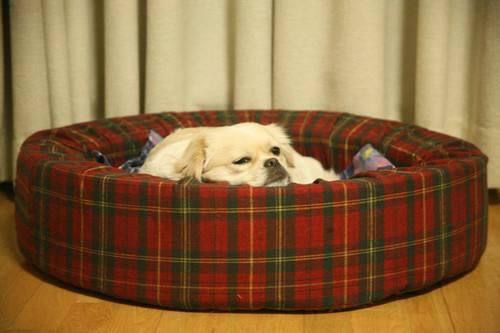狗狗不在狗窝睡觉,应该怎么训练狗狗习惯睡狗