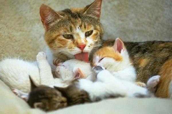 母猫生产要怎么护理?