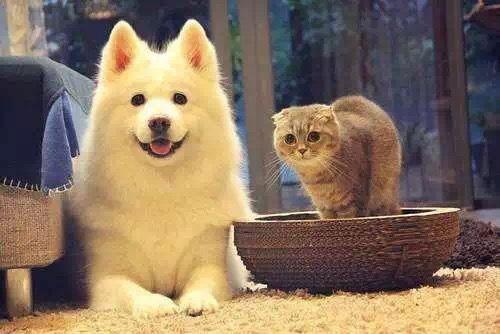 不同年龄段的猫狗每天需要喂食几次?