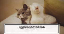 养猫用什么消毒液最好? 适合养猫家用的消毒液推