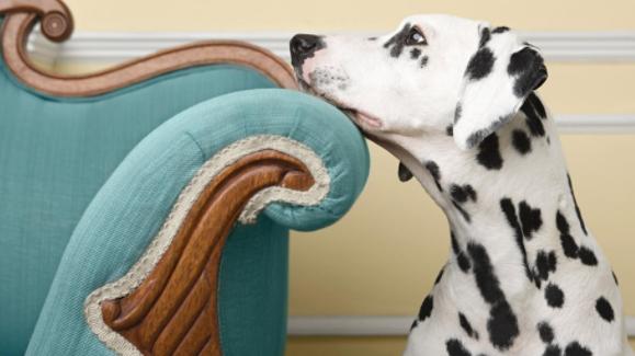 防控疫情期间如何与自家宠物共处?
