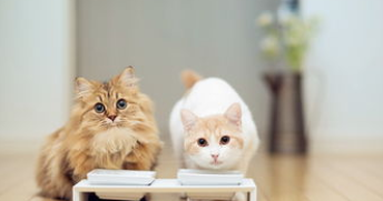 养猫不光要勤打扫,消毒也非常重要!