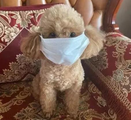 疫情期间狗狗怎么上厕所? 都快憋坏啦!