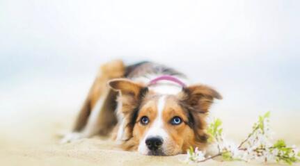 家中狗狗总在打喷嚏? 有时并不是着凉了那么简单