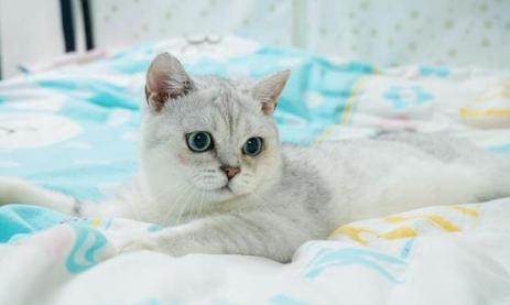 武汉猫坚强 宠主不在家猫咪独自生存40天还生了一窝小猫_猫猫_宠物百科_