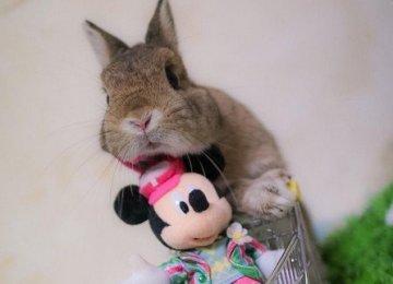 兔子界也有迪士尼控?童心指��100%的萌兔Chic